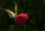Пеперуда ; comments:7