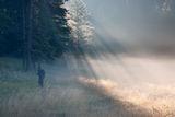 Мъгла под утринната светлина ; comments:21