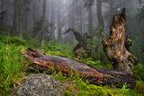 В дън горите...... ; comments:33