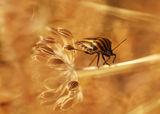 Bugs Live ; comments:8