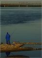 За риба ; comments:33