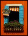"""""""...un canarino sopra la finestra"""" ; comments:11"""