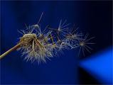 По стъпките на вятъра ; comments:5