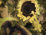 End of Summer (Sunflower) ; Comments:12