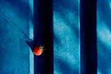 Нетипично за домат поведение ! ; comments:22