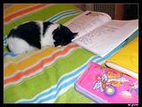 Чело коте книжки..... ; comments:3