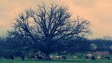 дървото на  душите ; comments:54