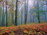 Есен ; comments:46