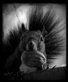 Портрет на един Пънкар ; comments:44