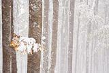 Снежна прегръдка ; comments:29