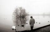 Black swan ; comments:11