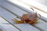 В памет на .......! Хората които си заминаха, като есенни листа ! ; comments:37