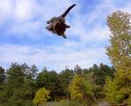 Полет 13-13 на Cat Airlines иска разрешение за кацане ;))) ; comments:4
