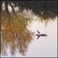 Есенни импресии ; Comments:24