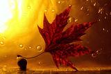 autumn ; comments:11