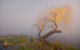 Мъглива сутрин ; comments:79