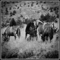 horses ; comments:1