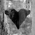 Black heart ; comments:13