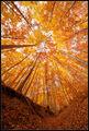 Есенна гора ; comments:39