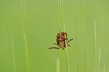 Уроци по тревно катерене ; comments:24