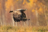 fly like a eagle ; comments:40