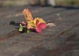 Есенни багри от Вършец ! ; comments:43
