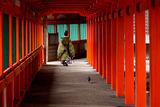 Shimane, Japan ; comments:113