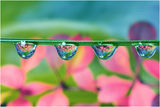 Waterdrops ; comments:42