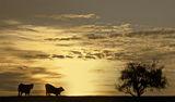 На залез слънце ... ; comments:55