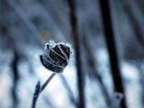 Замръзнали... ; comments:30