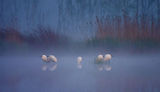 Мъгла... ; comments:80