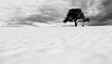 Храстът и Дървото ; comments:84