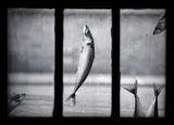 Да хапнем рибка на Никулден ; comments:54