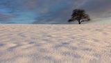 Бяла тишина ; comments:195