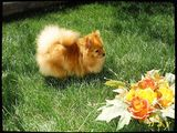 Луси в градината ; comments:4