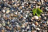 Плажа на Женевското Езеро ; No comments