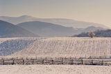 Зима ; comments:50