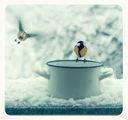 Птици гладници! ; comments:122