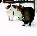Котки ; comments:5
