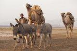 Трудовият ден започва на езерото Асале, Етиопия ; comments:10