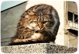Котенце ; comments:8