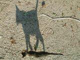 Сянката на котката ; comments:8