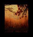 В  гората на мълчанието ; comments:84