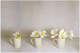 Бяла пролет ; comments:53