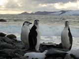 antarctic penguins ; Comments:35