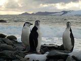 antarctic penguins ; Comments:35