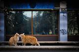 Оранжева целувка на котешкия бар ; comments:40
