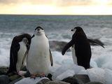 antarctic penguins 2 ; Comments:5