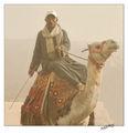 Камилар-Египет(Гиза) ; comments:21