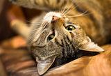 Игриво коте (с обектив Helios 44m 58mm f2) ; comments:4